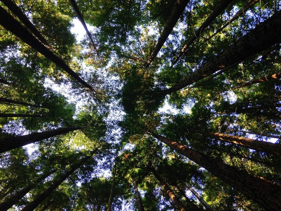 Naturaleza de altura, el Sabinar de Calatañazor
